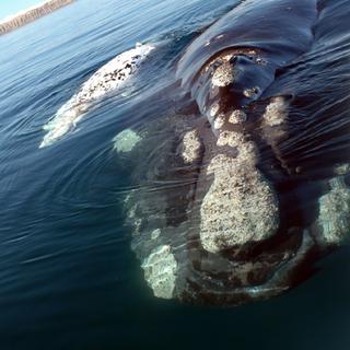 Whale Song - Beach
