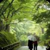 Rain On Trees
