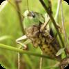 Merloth Park Crickets