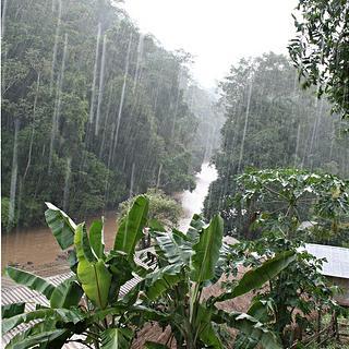 Rain - Jungle