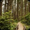 Deister Forest