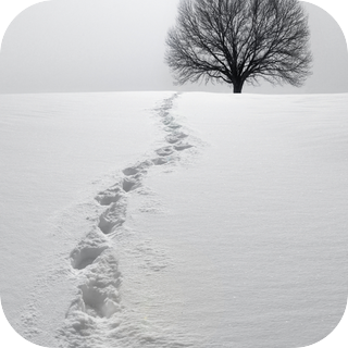 Footsteps Through Snow