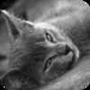 Kitten Purr