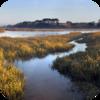 Soft Marsh