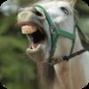 Horse Neigh
