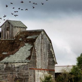 Quiet Farm