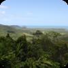 Seaside Forest