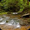 Pennsylvania Woodlands