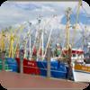 Windy Sea Harbor