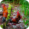 Domesticated Fowl