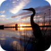 River Birds Cuckoo