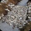 English Country Birds
