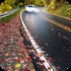 Rainy Roadway