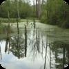 Flooded Marsh