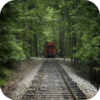 Train Through The Forest