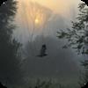 Kitsilano Birds