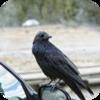 Birds and Light Traffic