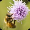 Buzzing Bees